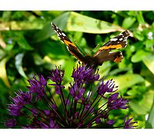Ready to Fly Butterfly Photographic Print