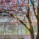 Thirteenth Street Winery in Spring by Marilyn Cornwell