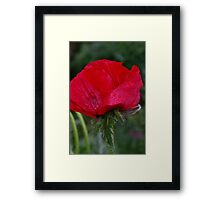 Tears of rememberance Framed Print