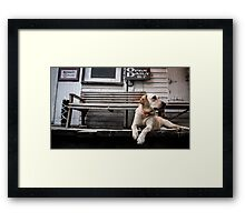 The Country Store Dog Framed Print