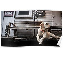 The Country Store Dog Poster