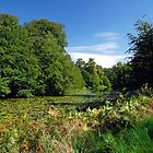 Mere Pond in Calke Park by Rod Johnson