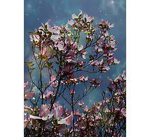 Skies Photographic Print