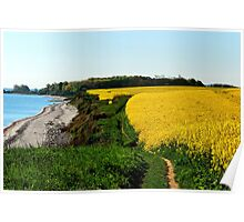 Rapeseed fields on the cliff in spring Poster