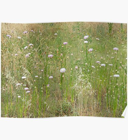 American Star Thistle Patch Poster