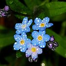 Forget Me Not by Tori Snow