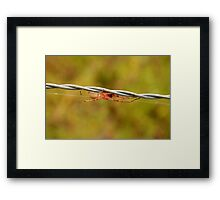 White Spider on Barbed Wire Framed Print