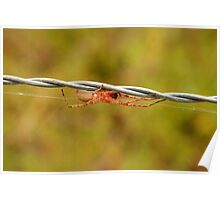 White Spider on Barbed Wire Poster