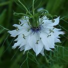 LOVE in A MIST by Marilyn Grimble