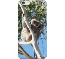 Koala gum tree Australia iPhone Case/Skin