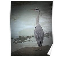 Vignetted Heron Poster