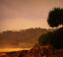 One Pandanus Tree by myraj