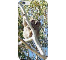 Koala gum tree Australia 2 iPhone Case/Skin