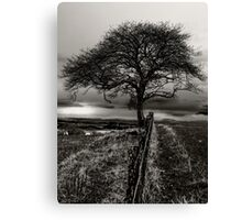 Lonely Tree, lonely sheep Canvas Print