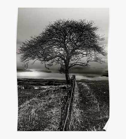 Lonely Tree, lonely sheep Poster