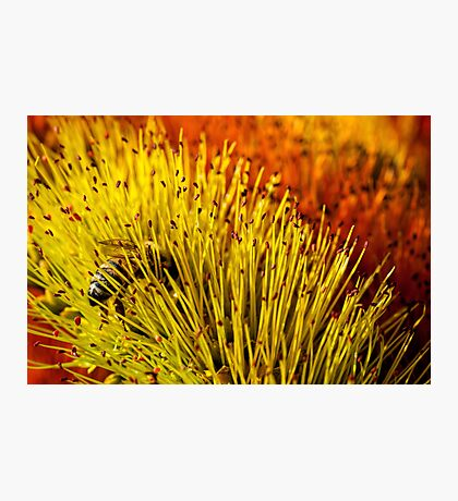 Tiptoeing through the stamens Photographic Print