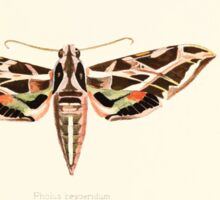 Aid to the identification of insects Charles Owen Waterhouse 1890 V1 V2 047 Pholus Hesperidum Jamaica Sticker