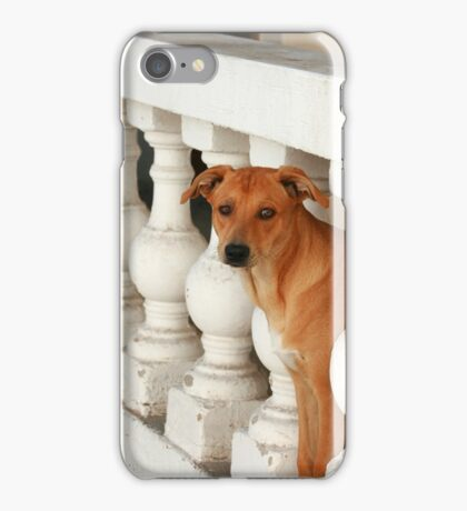 Dog Looking Through a Bannister iPhone Case/Skin