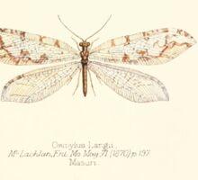 Aid to the identification of insects Charles Owen Waterhouse 1890 V1 V2 071 Osmylus Langii Masuri Sticker