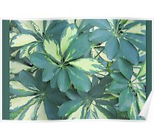 Softly Green Variegated  Poster