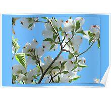Bright White Spring Poster