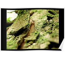 Mossy Tree Poster