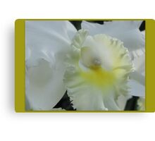 Snow White Orchid Canvas Print