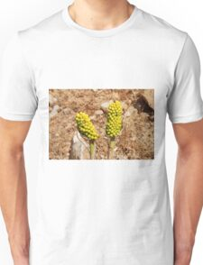 Dragon Lily seed heads, Greece Unisex T-Shirt