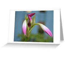 Pink Lily Bud Greeting Card