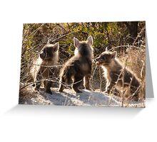 Hyena cubs, playful. Greeting Card