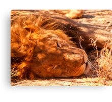 Lion sleeping, close-up. Canvas Print