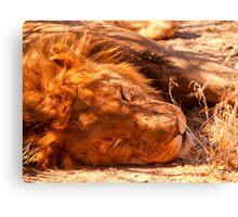 Lion sleeping, close-up. Canvas Print