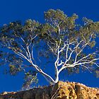 Tree at Omeo by Charles Kosina