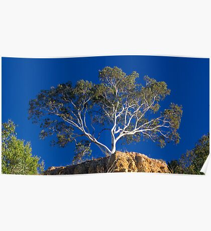 Tree at Omeo Poster
