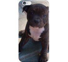 Staffy Staffordshire Puppy 2 iPhone Case/Skin