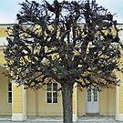 Schonbrunn Palace - Wien - Austria by Arie Koene