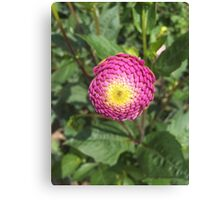 Purple/Yellow Flower Close-Up Canvas Print