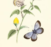 Aid to the identification of insects Charles Owen Waterhouse 1890 V1 V2 108 Lycaena Iburiensis Sticker