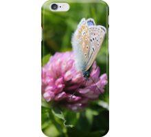 Common Blue feeding on pollen iPhone Case/Skin