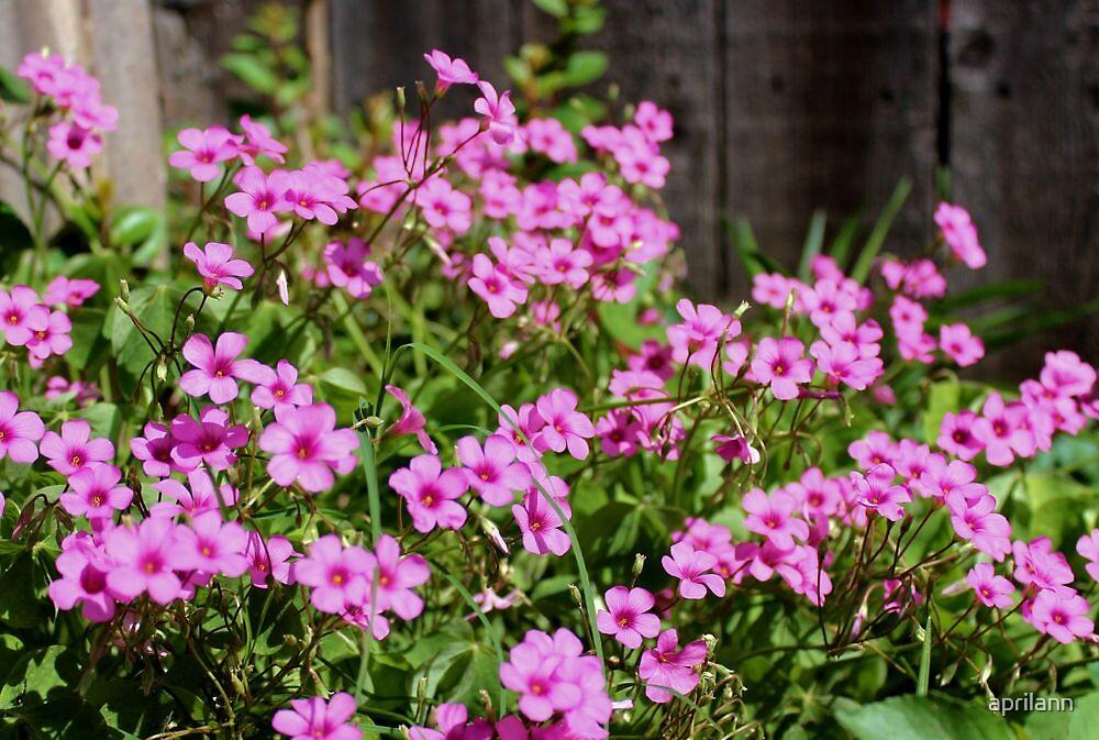 Blooming Pink! by aprilann