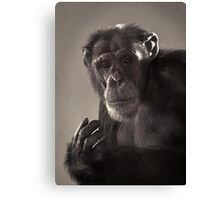 Chimp Portrait Canvas Print