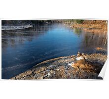 Beaver Pond in late autumn Poster