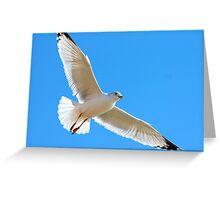 Seagull at White Rock Lake Greeting Card