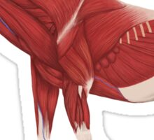 Paraceratherium anatomical study Sticker