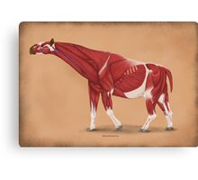 Paraceratherium anatomical study Canvas Print