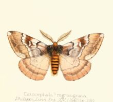 Aid to the identification of insects Charles Owen Waterhouse 1890 V1 V2 089 Catocephala Nigrosignata Chili Sticker