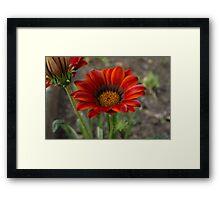 home garden Framed Print