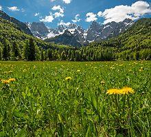 Julian Alps and Flower Meadow by Nick Jenkins
