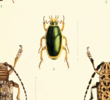 Aid to the identification of insects Charles Owen Waterhouse 1890 V1 V2 143 Various Sticker