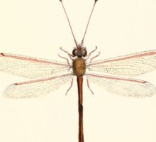 Aid to the identification of insects Charles Owen Waterhouse 1890 V1 V2 067 Helcopteryx Rhodiogramma Natal Sticker
